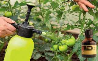 Йод для помидор подкормка рассады томатов