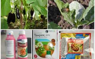 Колорадский жук на баклажанах как защитить растения