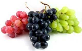 Сорта винограда по алфавиту названия виноградников