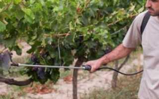 Чем можно опрыскать виноград: средства для борьбы с болезнями