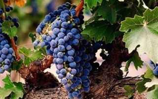 Обработка винограда при цветении как удобрять виды удобрений