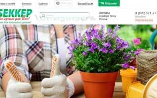 Тюльпан Баллада Голд (67478): купить луковицы почтой в России