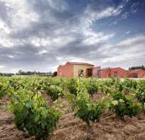 Виноград сорта для средней полосы России: особенности выращивания