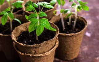 Когда высаживать помидоры в Подмосковье лучшие сорта посадка и выращивание