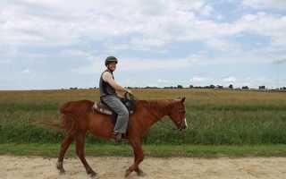 Как управлять лошадью: повод наездника, необходимые команды, положение тела, хлыст и шпоры