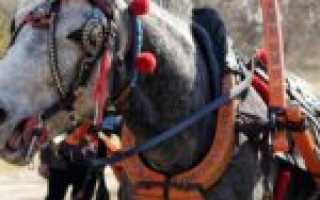 Из чего состоит и какая бывает упряжь для лошади?