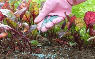 Подкормка свеклы органическими и минеральными удобрениями