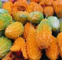 Индийский гранат характеристика сорта лечебные свойства