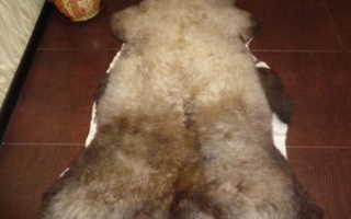Как почистить овечью шкуру в домашних условиях
