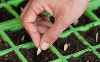 Как сажать кабачки посадка рассадой и уход в открытом грунте сроки и схема посадки