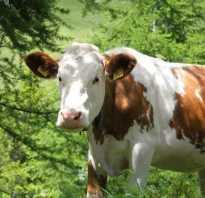 Виды болезней коров схемы лечения обзор