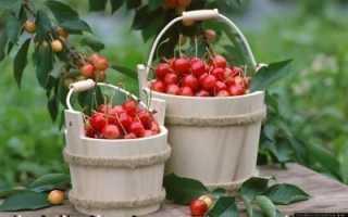 Приспособление для сбора вишни с высокого дерева как собрать оборвать с верхушки
