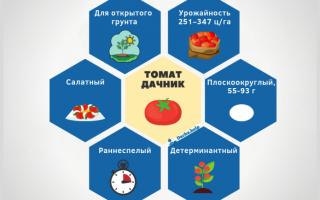 Томат Дачник описание сорта характеристика и фото помидор