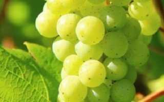 Выращивание винограда первый год посадка уход
