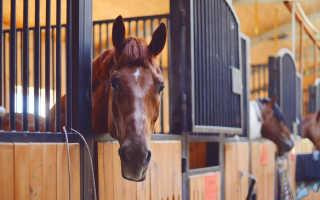 Как построить конюшню стойло для лошадей