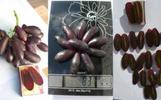 Сорт винограда яся описание сорта