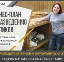 Бизнес-план по разведению и содержанию кроликов