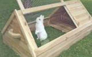 Кролиководство с чего начать и что нужно знать начинающим фермерам для разведения кроликов основы и советы