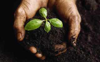 Как приготовить почву для лимона в домашних условиях