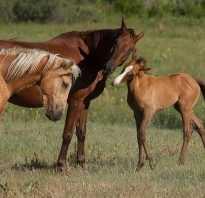 Cколько весит лошадь в среднем как определить вес без весов