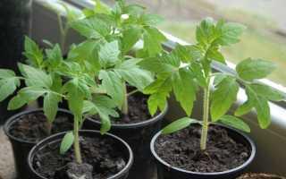 Пересадка рассады томатов как правильно это сделать в горшки выращивание и уход