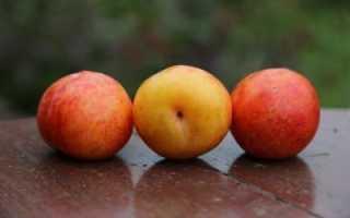 Гибрид персика и абрикоса название