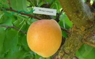 Абрикос монастырский: описание сорта, фото