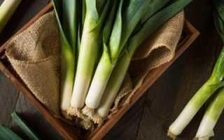 Как правильно хранить лук порей в погребе зимой