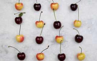 Садоводам на заметку: чем вишня отличается от черешни. Чем вишня отличается от черешни