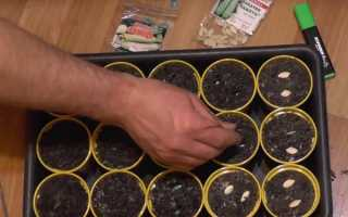 Когда сажать кабачки в открытый грунт семенами и рассадой