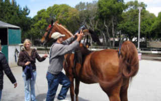 Как правильно седлать лошадь седловка