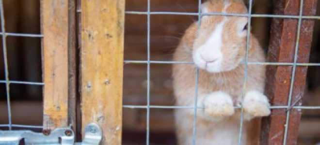 Клетка для кроликов виды для молодника какие для откорма