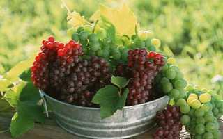 Лечение винограда народными средствами от болезней