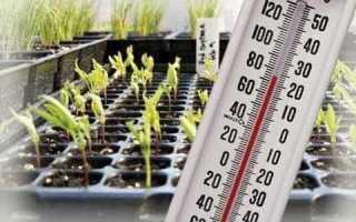Температура рассады баклажан какую выдерживают при какой высаживать