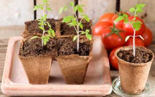 Посадка помидоров на март 2019 благоприятные дни лунный календарь