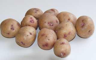 Картофель аврора – описание сорта и отзывы