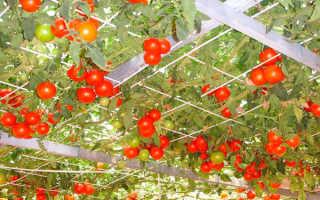 Томат Спрут F1: характеристика и описание сорта, технология выращивания