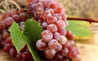 Красный виноград ранний среднеспелый поздний