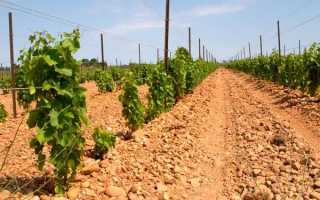 Когда можно сажать виноград осенью срок посадки основные работы