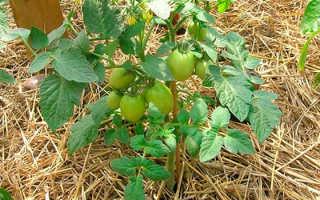 Мульчирование томатов в теплице различными материалами