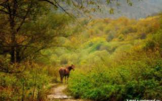 Зачем подковывают лошадей и как правильно это сделать