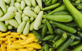 Чем удобрять кабачки подкормка при выращивании в открытом грунте