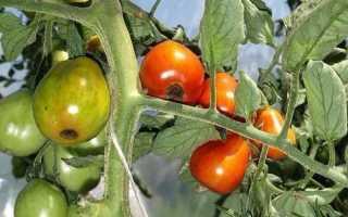Вершинная гниль томатов меры борьбы лечение растений в теплице