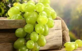Сорта винограда зеленого цвета полезные свойства состав