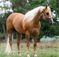 Дикие лошади: где живут и обитают кони в природе, как называются