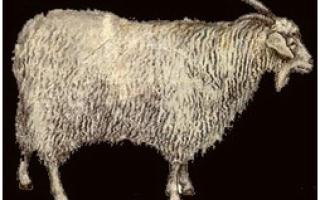 Породы коз: фото, названия и описание каждой из них