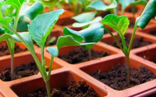 Когда и как сажать капусту брокколи на рассаду: посадка в домашних условиях