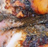 Болезни ног у коровы виды и их симптомы лечение профилактика