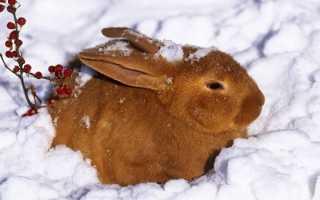 Чем кормить кроликов в домашних условиях зимой для быстрого роста как содержать на улице без сена выбор технология и заготовка кормов