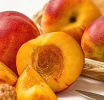 Сорта нектаринов (15 фото): зеленые и желтые виды фрукта, популярные сорта и их описание